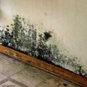 mold-remediation-cost
