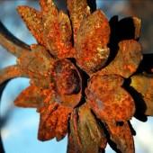 ржавый цветок