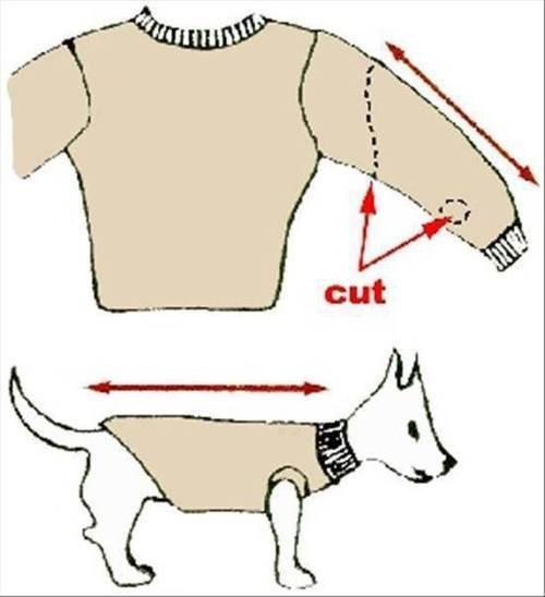 Одежда собаке своими руками фото